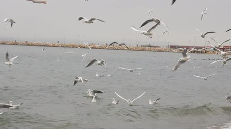 морских птиц : Seagulls flying above the sea in Yalove near Istanbul Turkey, winter time Стоковые видеозаписи
