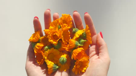 calendula blossoms : Womans hands hold and then throw calendula