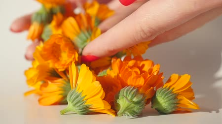 calendula blossoms : Womans hand put carefully calendula heads on white table to dry it Stock Footage