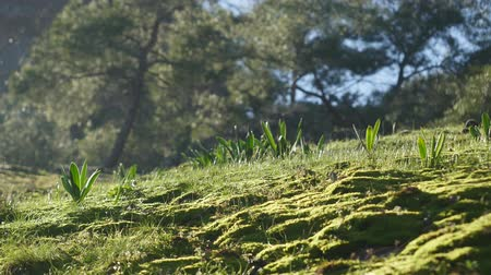 wood glade : Closeup of green grass, lawn on wood background Turkey nature