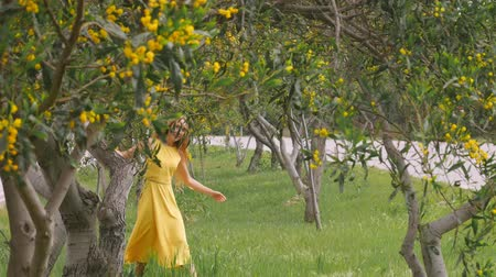 akacja : Young beautiful smiling woman with long blond hair in yellow dress walking in spring Australian Golden wattle trees garden between traffic roads. Green park zone in modern city. Wideo
