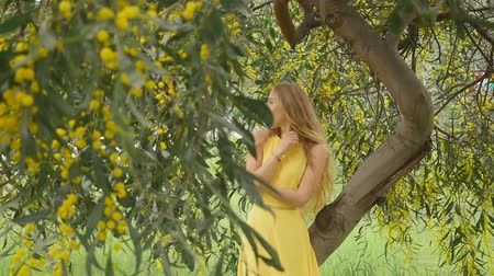 doğa arka plan : Young beautiful smiling woman with long blond hair in yellow dress standing under spring Australian Golden wattle tree in spring garden.