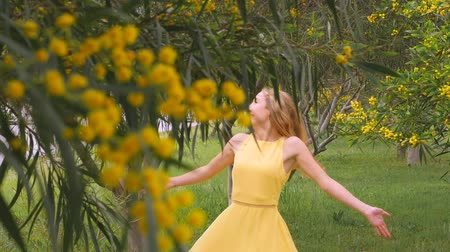 akacja : Young beautiful smiling woman with long blond hair in yellow dress walking in spring Australian Golden wattle trees garden between traffic roads. Green park zone in modern city. Slow-motion clip.