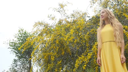 akacja : Young beautiful smiling woman with long blond hair in yellow dress standing under spring Australian Golden wattle tree in spring garden.