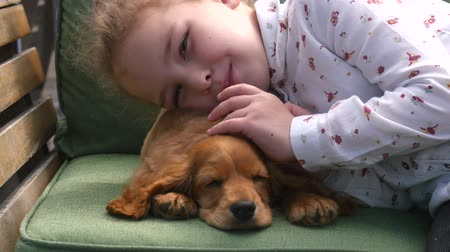 spanyel : Cocker spaniel puppy sweetly sleeping on the sofa, childs hand caresses it