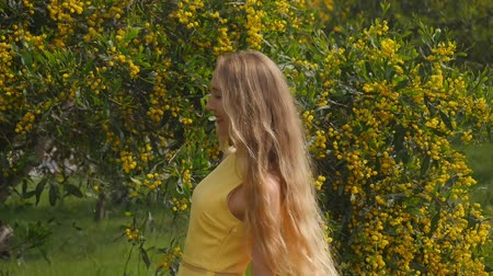 akacja : Young beautiful smiling woman with long blond hair in yellow dress enjoying the smell of spring Australian Golden wattle trees garden between traffic roads. Green park zone in modern city.