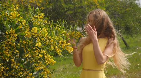 akacja : Young beautiful smiling woman with long blond hair in yellow dress enjoying the smell of spring Australian Golden wattle trees garden.
