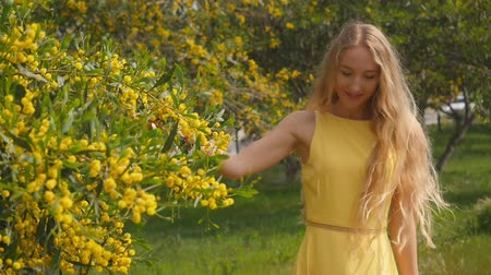 Австралия : Young beautiful smiling woman with long blond hair in yellow dress enjoying the smell of spring Australian Golden wattle trees garden in slow-motion. Стоковые видеозаписи