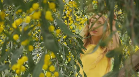 akacja : Portrait of young beautiful smiling woman with long blond hair in yellow dress standing under spring Australian Golden wattle tree in spring garden. Wideo