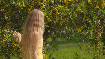 акация : Young beautiful smiling woman with long blond hair in yellow dress enjoying the smell of spring Australian Golden wattle trees garden in slow-motion. Стоковые видеозаписи