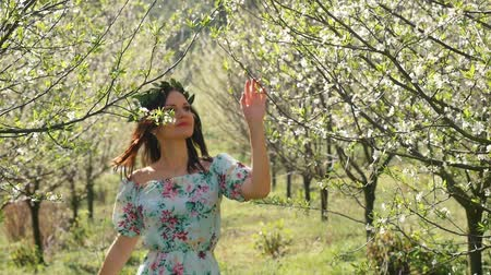 śliwka : Young beautiful caucasian woman in long dress in bay leaf wreath walking dreamily in spring blossom plum garden. Wideo