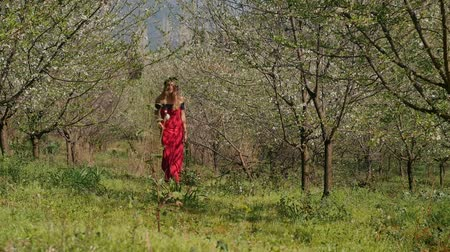 śliwka : Young beautiful caucasian woman in long red dress in bay leaf wreath walking alone dreamily in spring blossom plum garden. Wideo