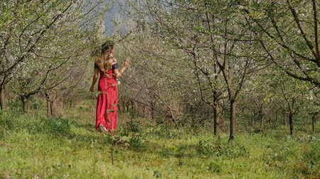 prune : Young beautiful caucasian woman in long red dress in bay leaf wreath walking alone dreamily in spring blossom plum garden. Vidéos Libres De Droits