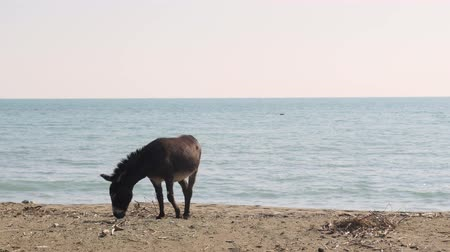ezel : Donkey eating grass near a beach in Phaselis Turkey