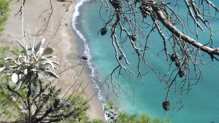 phaselis : Top view through the pine bare branches from the hill to sandy wild beach by mediterranean sea in Phaselis Turkey