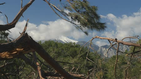 after the storm : Windfall in forest. Storm damage. Winter mountain Tahtali picturesque view from Phaselis, Kemer, Turkey 2019 Stock Footage