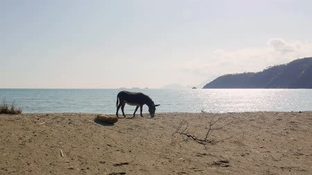 phaselis : Donkey eating grass near a beach in Phaselis Turkey