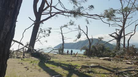 antalya : Windfall in forest. Storm damage. Winter mountain Tahtali picturesque view from Phaselis, Kemer, Turkey 2019, two people walking on the background Stock Footage