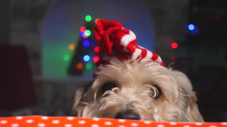 терьер : Cute puppy dog in small Christmas hat staying behind the table and looking to camera. Decorative fireplace and garland illumination on background
