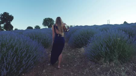 lavender field : Young woman in dark blue dress holding shoes in hands walking barefoot in lavender field. Sunset time. Back view. Slow motion.