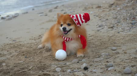 Cute Pomeranian Spitz in Santa hat lying near the sea. New Year holiday concept.