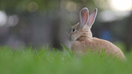 Cute fluffy curious rabbit sitting in the grass at a sunny summer day