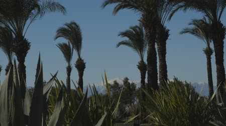 usa today : Beautiful park with palms and agaves, snowy mountain peaks on the background