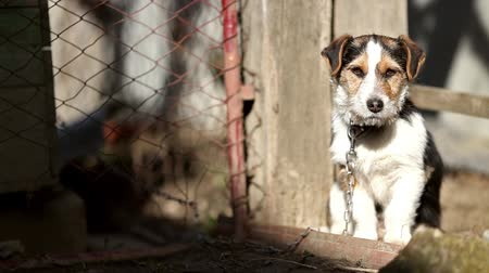 огорчен : Dog sunbathing at dog shelter