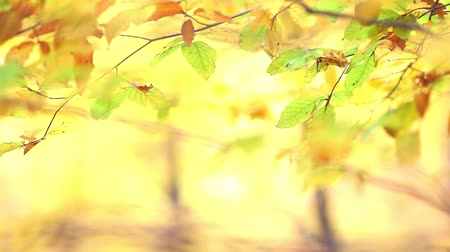 papel de parede : Autumn leaf background