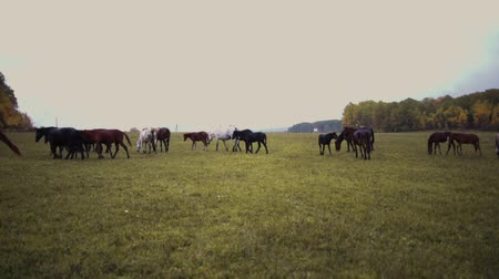 konie : many different horses run on a green field on a cloudy day