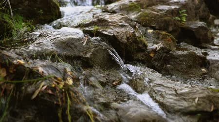 virgem : A stream of water flows among the stones. A clean mountain stream near tall grass. Virgin nature.