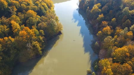 faia : Aerial drone view of colorful beech forest in autumn. Mountain wood and pond from above.