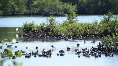 common salt : group of wild birds gather in the wetland on reserved sanctuary