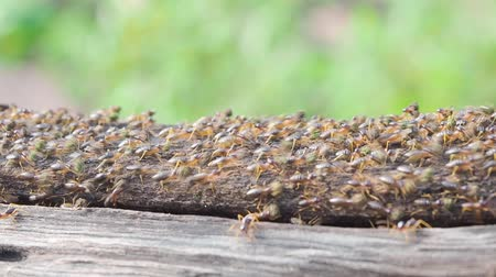 nuisance : termites are insects that eat wood in house, can be controlled by pesticide or chemical substance