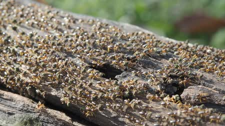 termite : termites are insects that eat wood in house, can be controlled by pesticide or chemical substance