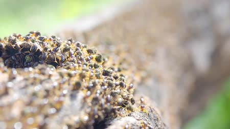 brood : termites are insects that eat wood in house, can be controlled by pesticide or chemical substance