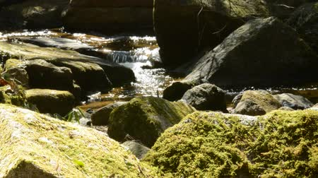 liquidação : A stream of water shining in the light and a rock covered with moss Stock Footage