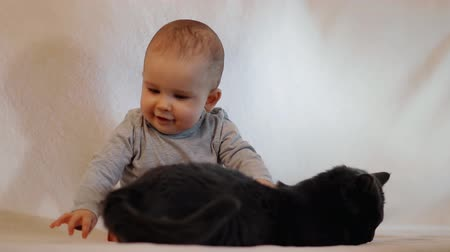 playful infant : A small cheerful child tries to catch a cat by the tail. Baby plays with cat. Slow motion shot. Stock Footage