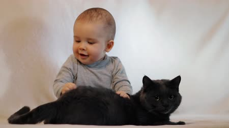 kittens playing : Slow motion shot of portrait of a little boy and a cat sitting on the couch. The friendship of the child and the cat.