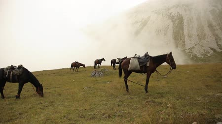 sörény : Horses grazing in a meadow in the mountains. Stock mozgókép