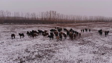 hoof : Horses in the winter landscape.