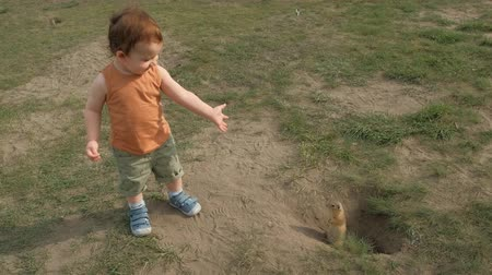 A little boy happily watching a rodent in the Park. 動画素材