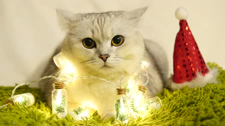 Christmas Cute Cat With Red Hat And Bright Light Bulbs Dostupné videozáznamy