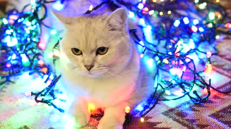 Bright Christmas Cat, Beautiful Cat Is Wrapped In A Garland