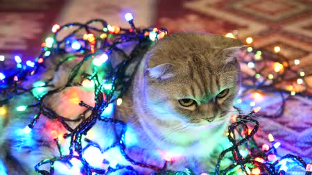 Close Up View Of Christmas Cat With Christmas Tree