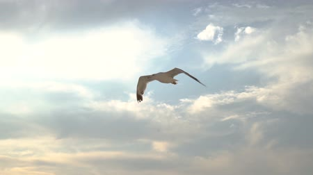 hajtogatott : seagull flying in slow motion against scenic clouds and sun Stock mozgókép