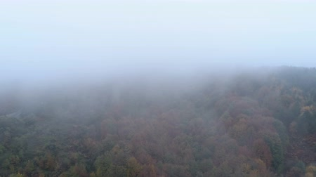 маркировка : Aerial drone view of mist going above tree tops in the fall. Autumn forest with fog