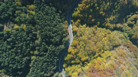 bułgaria : Top view of car driving on mountain road. Evergreen forest on the one side of the road and golden tree tops on the other