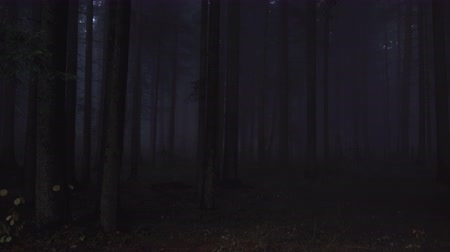 ijesztő : Deep dark woods in the night. Supernatural, spooky, mysterious pine forest with mist in the night