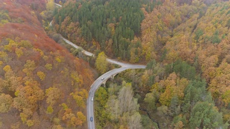 ahnen : Aerial view of few cars taking right turn, driving on forest asphalt road